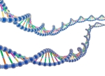 The World of DNA